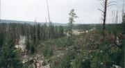 Fire damage at Yellowstone 7/3/02