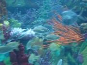 Sea_010