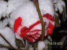snow_014