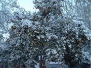 snow_019