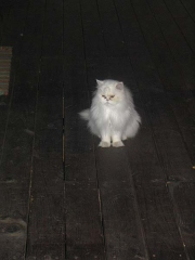 one of the owner's three cats