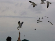 people feeding the seagulls