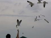 people feeding the seagulls
